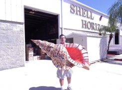We have huge hand made shells