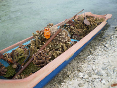 Coral removed for shipping channel<br>(permits to sell these corals on file.