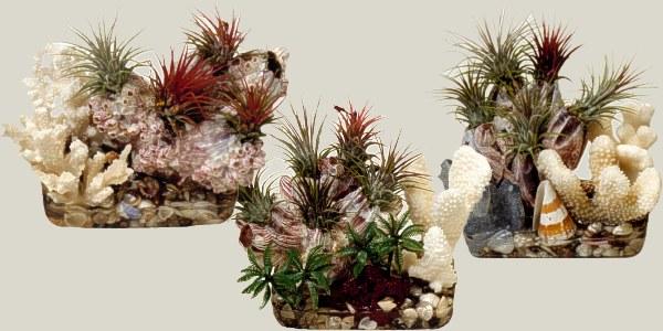 عالم النباتات المنزلية B1-34
