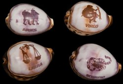Carved Cowrie Zodiac - Click For Larger View